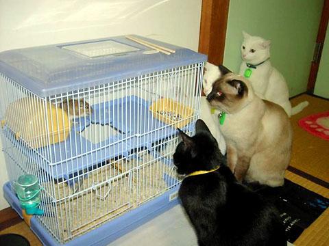 cats (12)