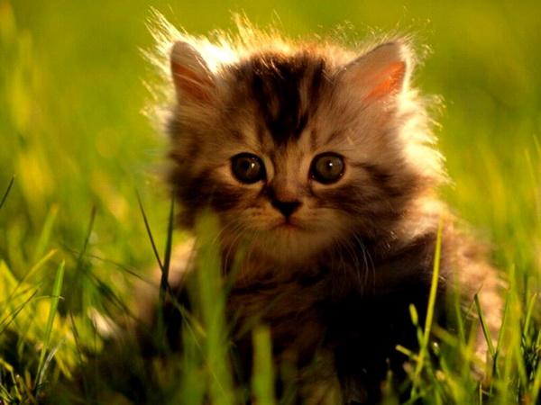 cats (16)