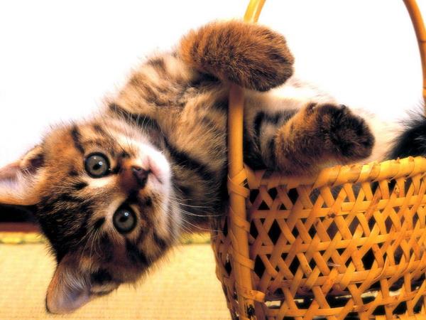 cats (4)