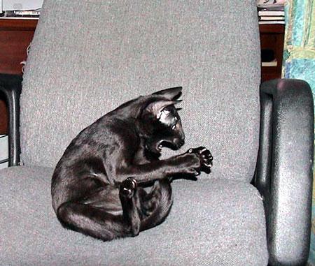 cats (7)