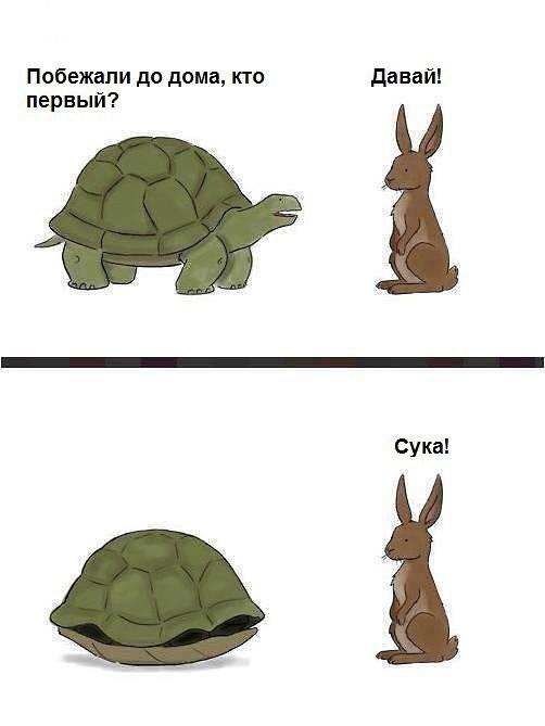 Кто первый домой черепаха или заяц?