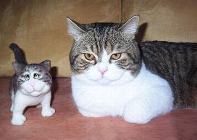 Приколы о кошках