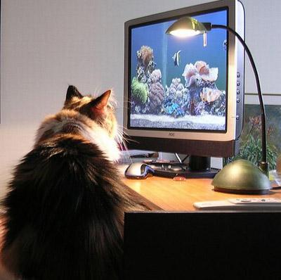 Юмор о кошках