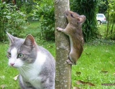 коты фотоприколы