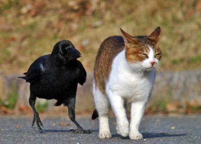 Позитивные фотки котов
