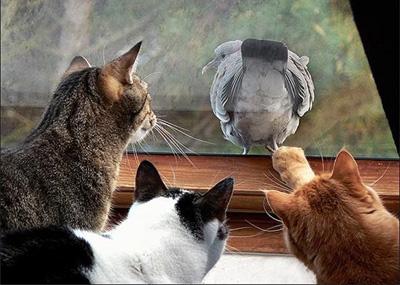 Смешные фотки котов