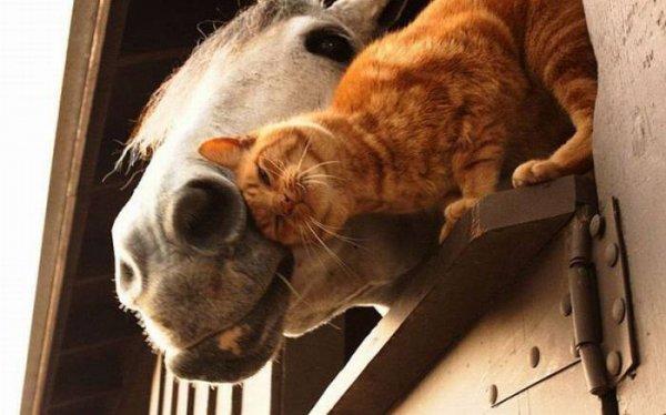 позитивные фото животных