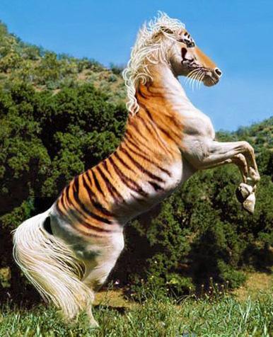 тигр юмор