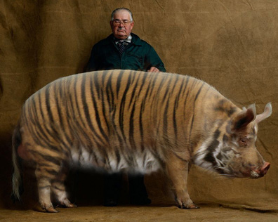 фотоприколы тигр
