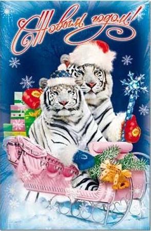 tigr6